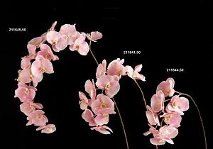 Картинки орхидея в вазе